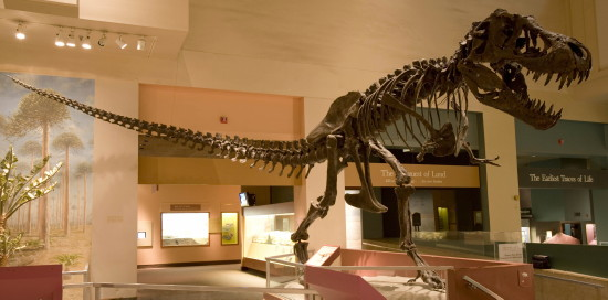 dinosaur hall smithsonian natural history museum t rex 550