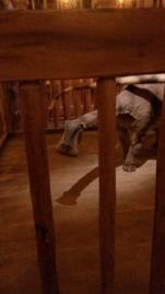 dino at ark encounter